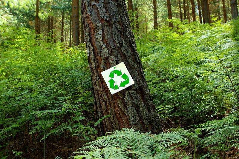 Recycle sign stuck to the bark of a pine tree with ferns in the background